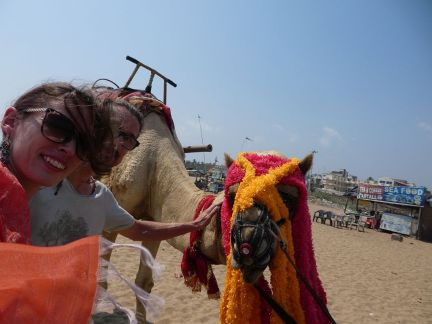 Kamele am Strand von Puri