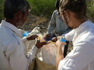 Vorbereitungen für die Kamel-Safari