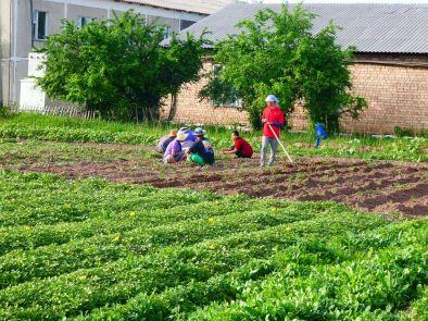 Die Kids von der Farm auf dem Feld. Die Ernte konnte sich zeigen lassen!
